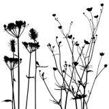 Colección para los diseñadores, vector de la planta Imagen de archivo