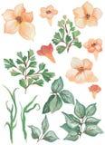 Colección pintada acuarela La acuarela excelente del diseño florece y los elementos de las hojas para la invitación Imagenes de archivo