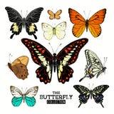 Colección realista de la mariposa Imagen de archivo