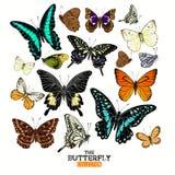 Colección realista de la mariposa Imagen de archivo libre de regalías