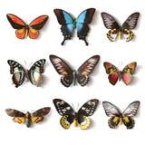 Colección rellena de la mariposa de los insectos Fotografía de archivo libre de regalías