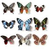 Colección rellena de la mariposa de los insectos Fotos de archivo libres de regalías