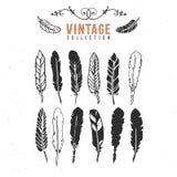 Colección retra de la tinta de la pluma de pluma de la semilla del vintage vieja Imagen de archivo libre de regalías