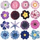 Colección retra de las flores del diverso vintage aislada en blanco Foto de archivo libre de regalías