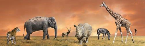 Colección salvaje de los animales de la sabana Imágenes de archivo libres de regalías