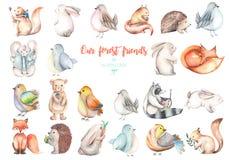 Colección, sistema de ejemplos lindos de los animales del bosque de la acuarela ilustración del vector