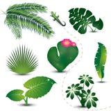 Colección tropical de las hojas Fotos de archivo
