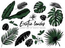 Colección tropical de las hojas Elementos aislados vector en la pizca stock de ilustración