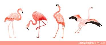 Colección tropical del flamenco Fije de trópico y de diseño decorativo de los pájaros exóticos del verano de la selva Pájaro rosa ilustración del vector