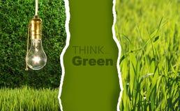 Colección verde de fotos respetuosas del medio ambiente Foto de archivo libre de regalías
