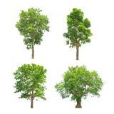 Colección verde de los árboles aislada Foto de archivo