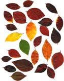 Colección XXL de la hoja del otoño fotografía de archivo libre de regalías