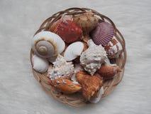 Colecci?n de diverso urcihn de los animales de mar, caracol, d?lar de arena, c?scara, cangrejo en blanco imagenes de archivo