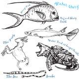 Colección 1 de los animales del agua Foto de archivo