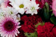 Colección colorida hermosa de celebración del verano de la primavera de las flores Foto de archivo libre de regalías