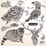 Colección de animales dibujados mano del vector Foto de archivo libre de regalías