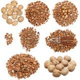 Colección de cáscaras de nuez nuts y vacías Imagen de archivo libre de regalías