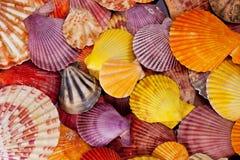 Colección de diversas conchas marinas coloridas en fondo negro Imagen de archivo libre de regalías