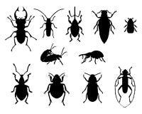 Colección de escarabajos Fotografía de archivo libre de regalías