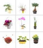 Colección de flores Imágenes de archivo libres de regalías