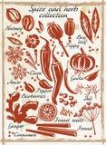 Colección de la especia y de la hierba Imagenes de archivo