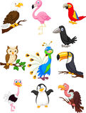 Colección de la historieta del pájaro Imagen de archivo