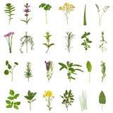 Colección de la hoja y de la flor de la hierba Imágenes de archivo libres de regalías
