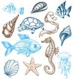 Colección de la vida de marina Imágenes de archivo libres de regalías