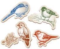 Colección de los pájaros Fotos de archivo libres de regalías