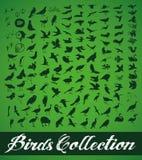 Colección de los pájaros Foto de archivo