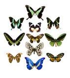 Colección de mariposa Imágenes de archivo libres de regalías