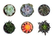 Colección de plantas y de cactos Foto de archivo libre de regalías