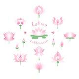Colección rosada de los lotos Foto de archivo