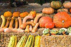 Colecciones coloridas de las calabazas y en el mercado de los granjeros para la venta fotos de archivo libres de regalías