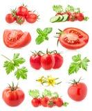Colecciones de tomates foto de archivo libre de regalías