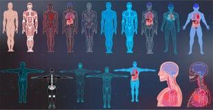 Colecciones del cuerpo de la radiografía en el estilo futurista de HUD SCI stock de ilustración