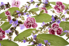 Colection with  flowers and herbs Royalty Free Stock Photos