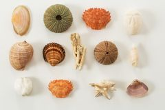 Colection of various sea animals urcihn, snail, sand dollar, shell, crab, coral royalty free stock photography