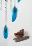 Colector ideal con las plumas azules Fotografía de archivo libre de regalías