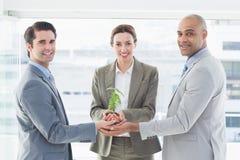 Colegas do negócio que mantêm a planta unida Foto de Stock Royalty Free