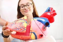 Colegiala en el modelo de observación de la biología de la lección del corazón humano Imagen de archivo