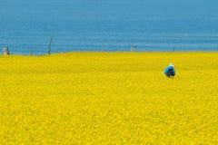 colen blommar hav Royaltyfri Bild