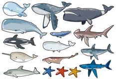 Coleção 1 de Sealife Fotografia de Stock Royalty Free