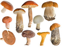 Coleção comestível dos cogumelos Imagem de Stock