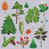 Coleção da floresta do vetor Imagens de Stock