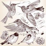 A coleção da mão do vetor tirada detalhou pássaros para o projeto Imagens de Stock