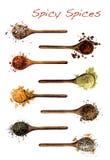 Coleção das especiarias em colheres de madeira Imagem de Stock Royalty Free