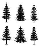 Coleção das árvores de pinho Fotos de Stock