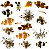 Coleção de 17 peixes tropicais Imagem de Stock Royalty Free
