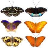 Coleção de borboletas coloridas Fotografia de Stock